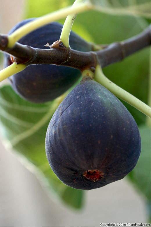 Fresh Fig Fruit Recipe with Picture
