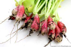 Radish Pesto Recipe