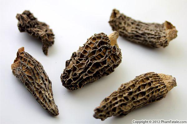 Morel Mushroom Picture